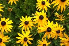 Blüten im Garten in Rüttihubelbad