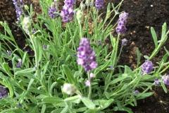 Blüten Zauber rund ums Haus