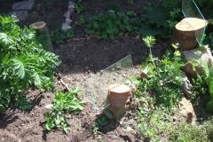 Blumen und Kunst im Syntropia-Garten