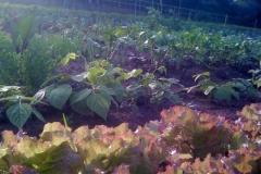 Effizient selbst Gärtnern in Gemeinschaft
