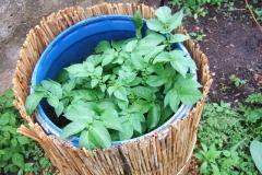 Kartoffeltonne, Kräuterspirale und Salatbeet