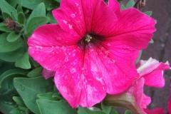 Mai-Blüten