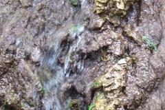Reichenbach-Wasser - entdecke die Naturwesen
