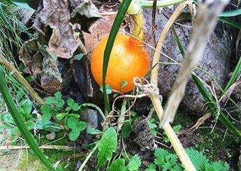 Garten Zauber Im November